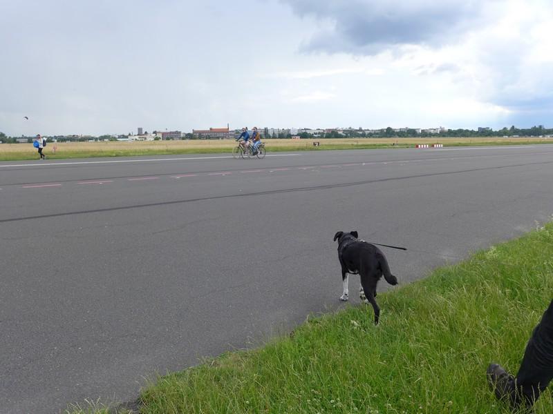 Ausflug-Hund-Berlin-Tempelhofer-Feld (14)