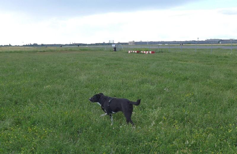 Ausflug-Hund-Berlin-Tempelhofer-Feld (20)