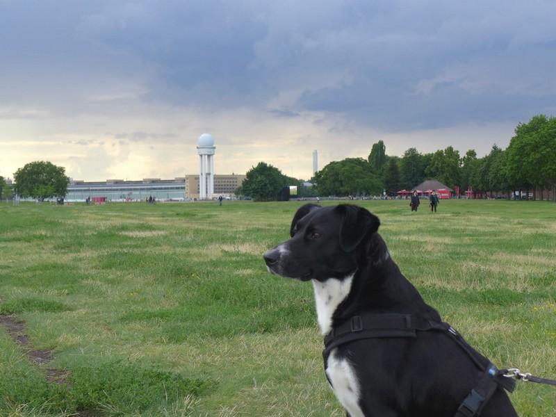Unterwegs auf dem Tempelhofer Feld