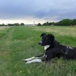 Entspannung zwischen Wiesenmeer und ehemaligen Landebahnen – unterwegs auf dem Tempelhofer Feld