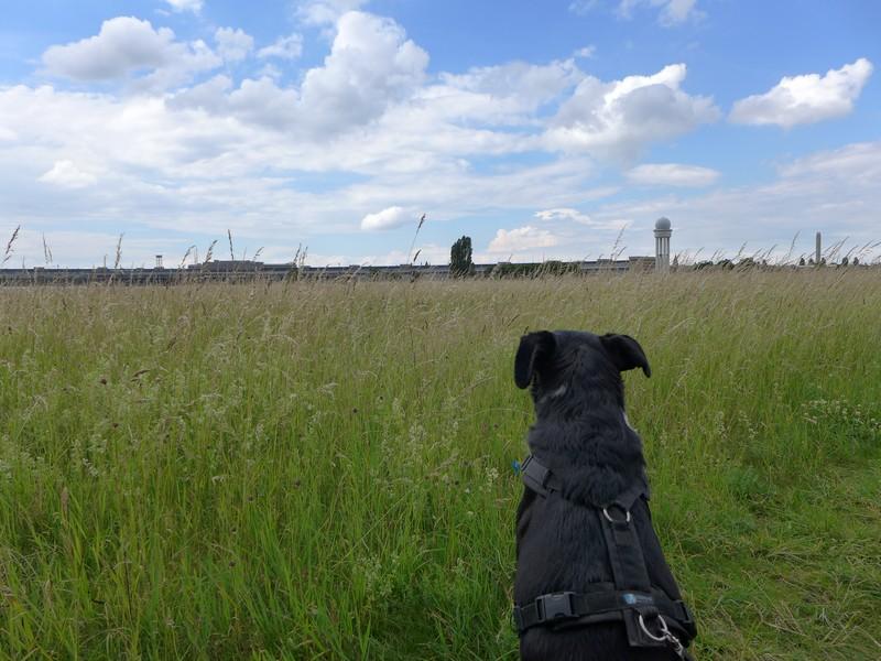 Ausflug-Hund-Berlin-Tempelhofer-Feld (9)