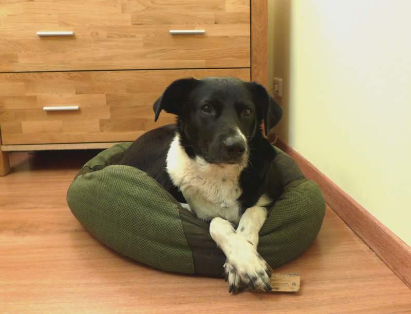 Unterkunft mit Hund - unsere Erfahrungen