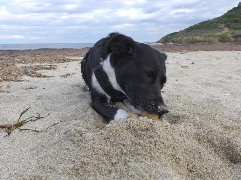 Seebälle am Strand - natürliches Spielzeug ist am schönsten ;-)
