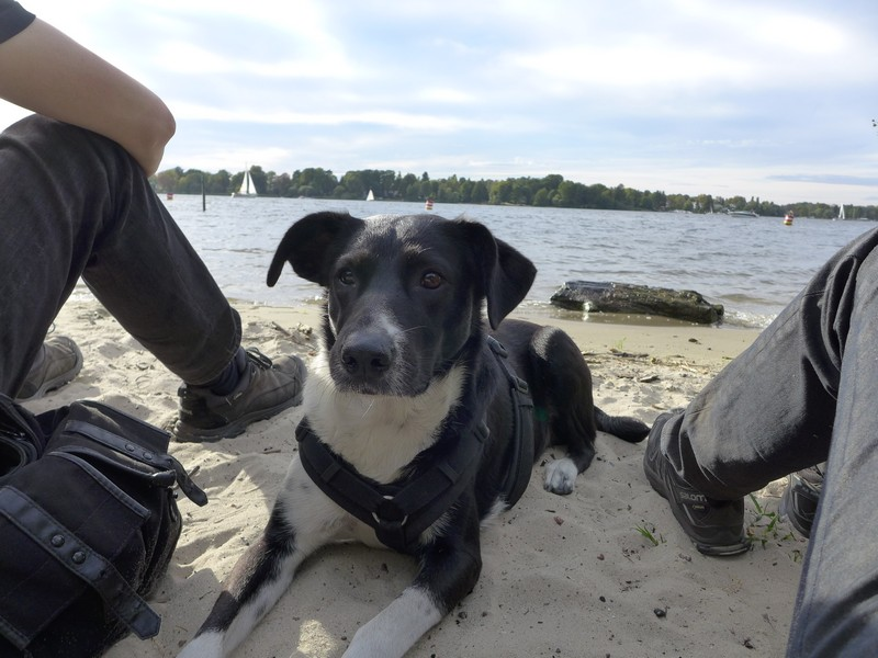 Relaxen mit Hund am Havel-Strand