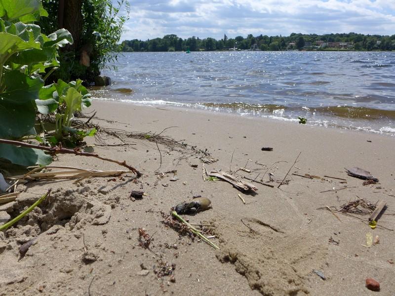 Strand an der Havel