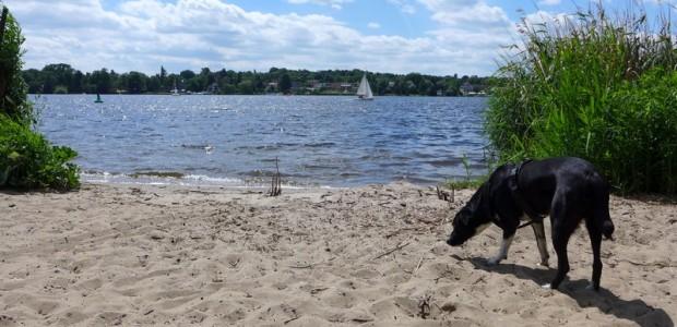 Zu Schnüffeln gibt es auch am Havel-Strand