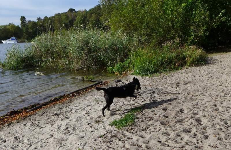 Flitzen am Havel-Strand