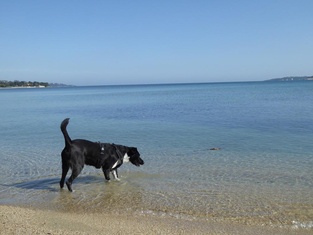 Schönes Meer und Strand von Port Grimaud
