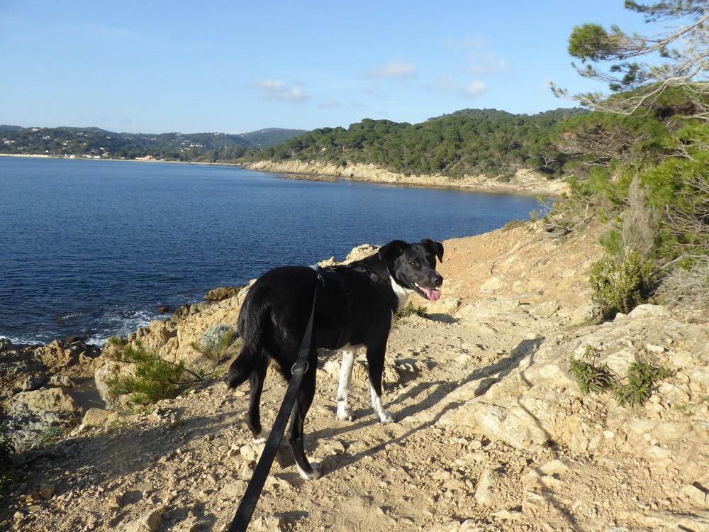 Küstenwanderweg auf der Halbinsel von St. Tropez
