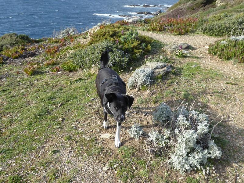 ausflug-mit-hund-ile-des-embiez-cote-dazur (27)