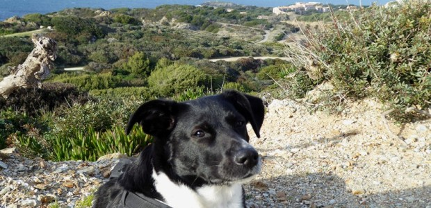 Ausflug mit Hund zur Ile des Embiez mit tollen Aussichten auf dem Rundwanderweg