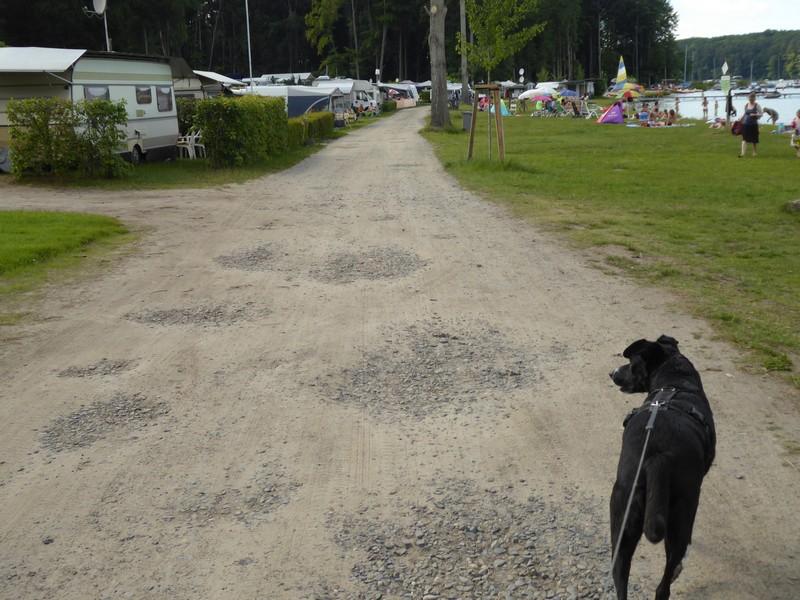 wanderung-ausflug-mit-hund-werbellinsee-barnim (12)