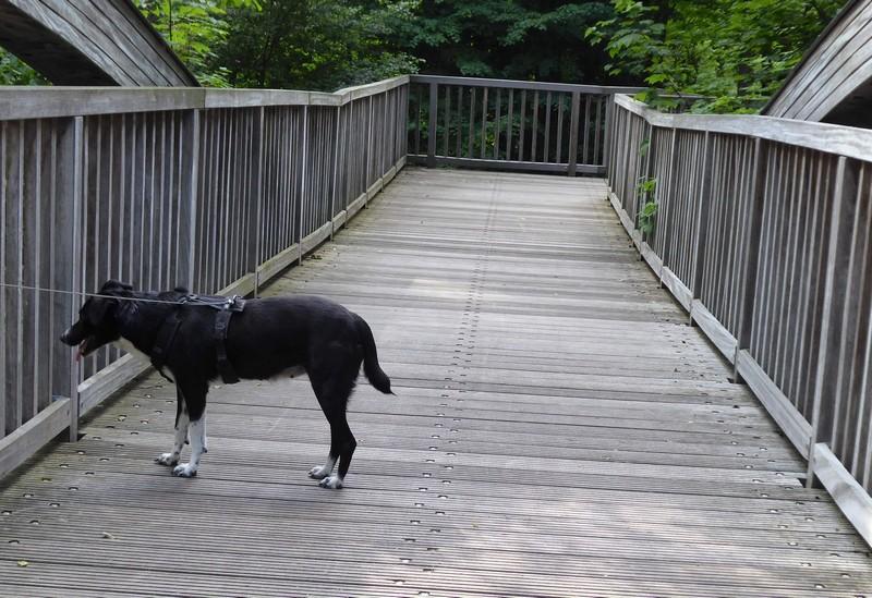 wanderung-ausflug-mit-hund-werbellinsee-barnim (18)