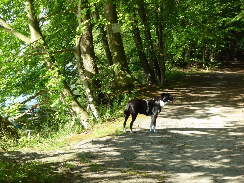 wanderung-ausflug-mit-hund-werbellinsee-barnim (30)