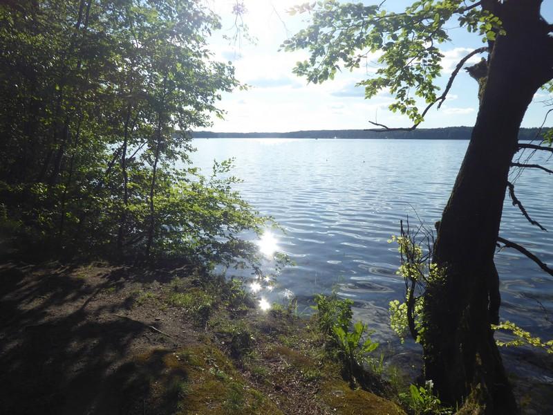 wanderung-ausflug-mit-hund-werbellinsee-barnim (33)