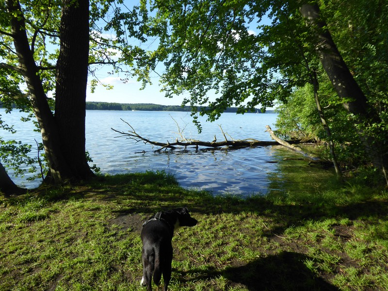 wanderung-ausflug-mit-hund-werbellinsee-barnim (34)
