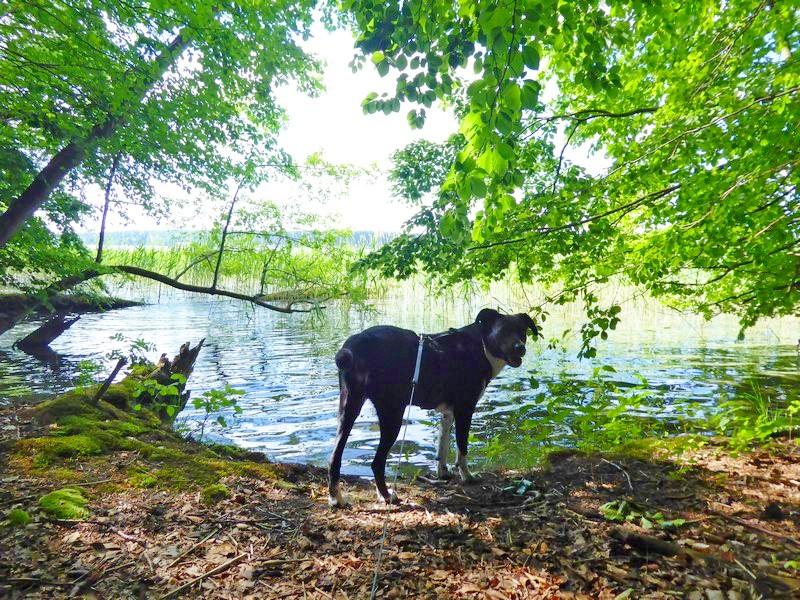 wanderung-ausflug-mit-hund-werbellinsee-barnim (4)