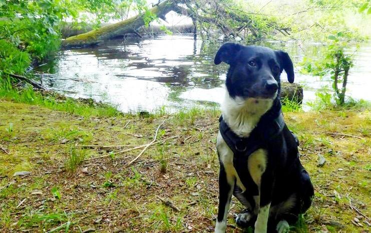 wanderung-ausflug-mit-hund-werbellinsee-barnim (8)