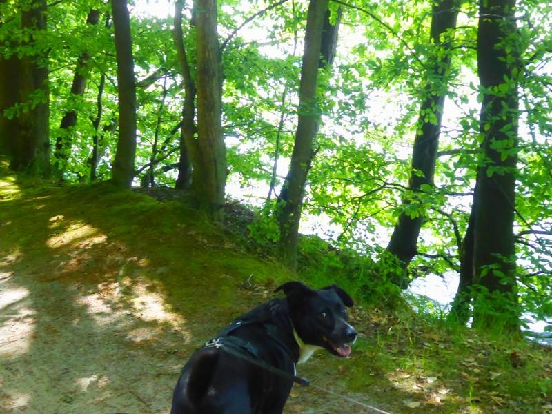 wanderung-ausflug-mit-hund-werbellinsee-barnim