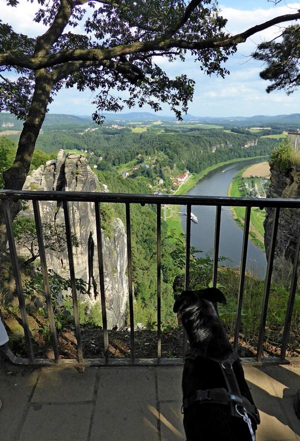 Ausblick auf die Elbe und die beeindruckende Felsenlandschaft