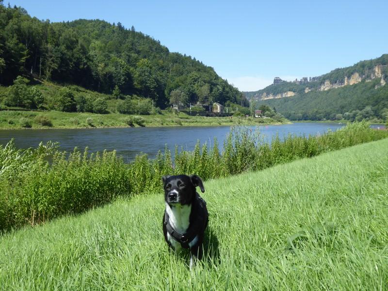 urlaub-mit-hund-saechsische-schweiz-elbsandsteingebirge-ausflugstipps (7)