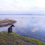 Unser Jahreswechsel an der Mecklenburger Seenplatte