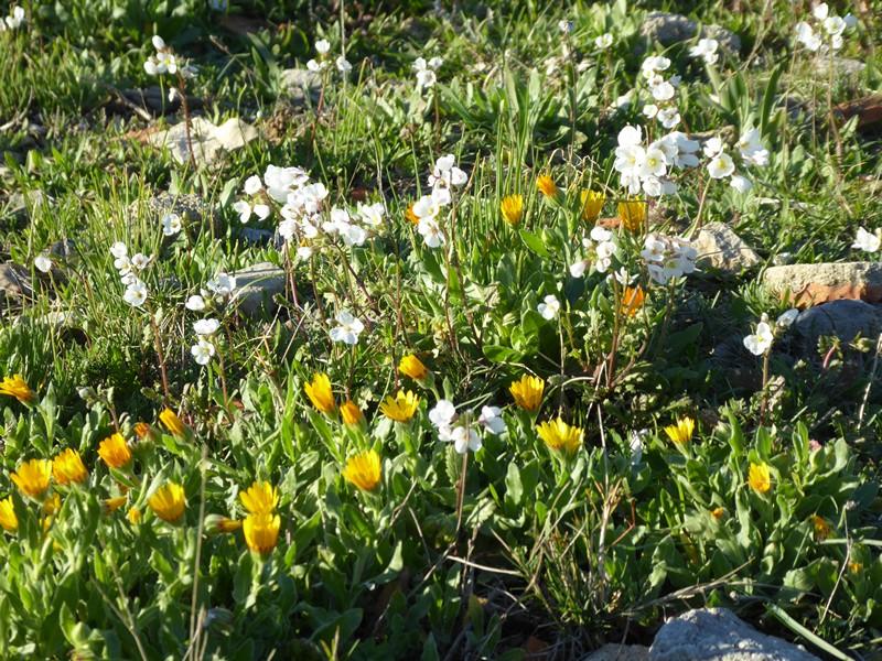 Blühende Pflanzen im Februar :-)