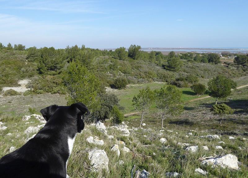 Direkt vorm Gartentor: Naturschutzgebiet und im Hintergrund Lagunen und Mittelmeer