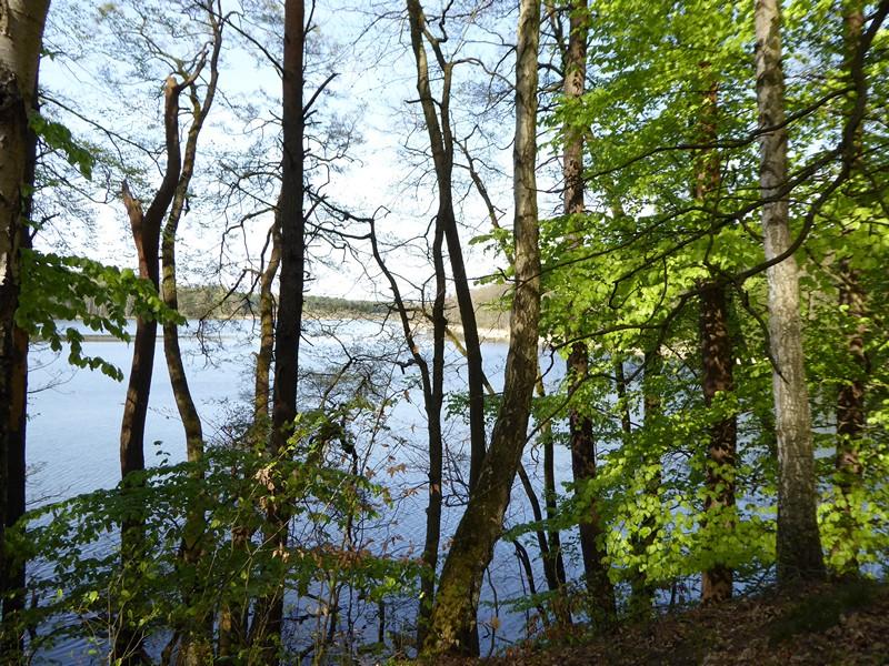 Im Wald kann die Aufzeichnung Lücken aufweisen