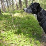 Getestet: Tractive GPS Tracker für Hunde