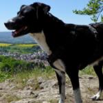 Schönes Ausflugsziel: der Landschaftspark Altenstein in Thüringen