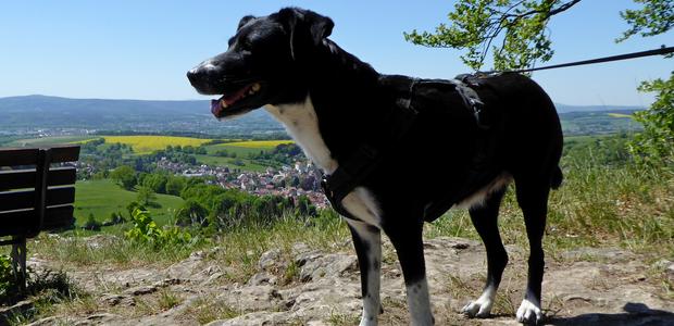 Ausflug mit Hund Altenstein Thüringen