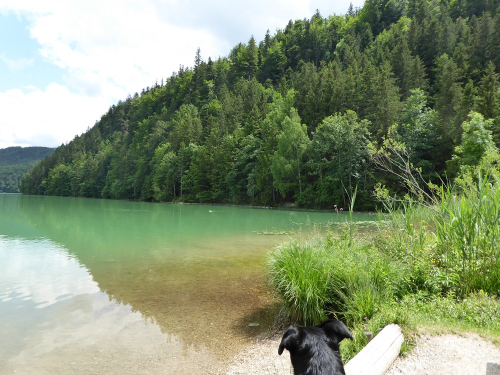 Mit Hund am Weissensee im Allgäu