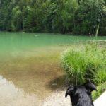 Mit Hund im Allgäu – traumhafte Seen, Wildblumenwiesen und Burgen