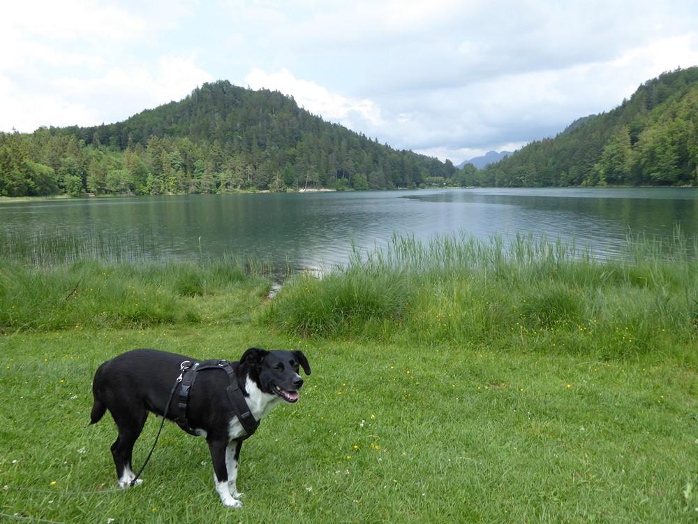 Mit Hund am Alatsee im Allgäu