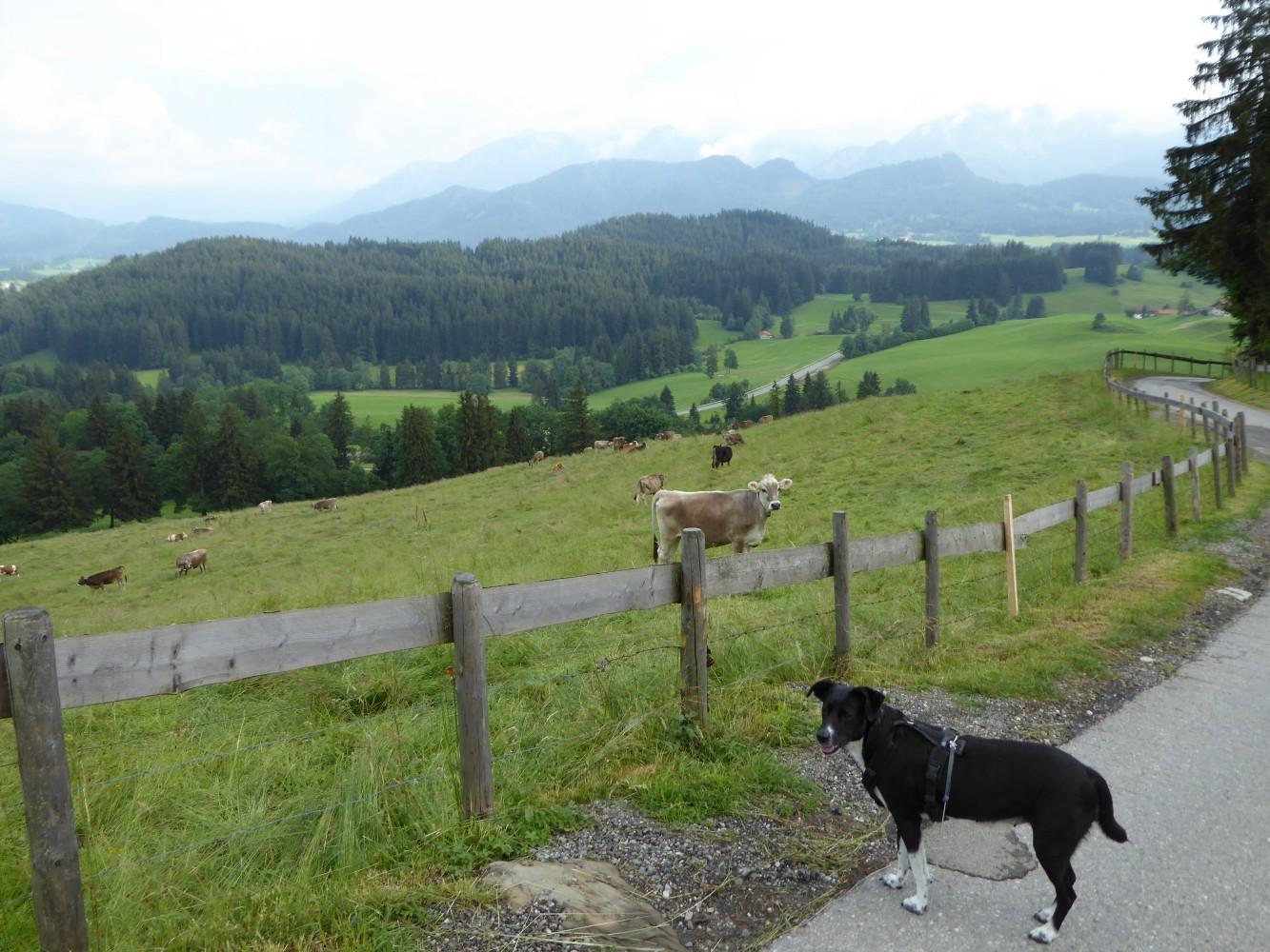 Aufstieg von Zell zur Burg Eisenberg