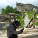 Tolle Ausflüge mit Hund zu drei mittelalterlichen Burgen im Ostallgäu