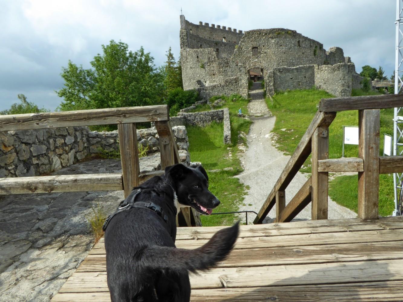 Ausflug mit Hund zur Burgruine Eisenberg