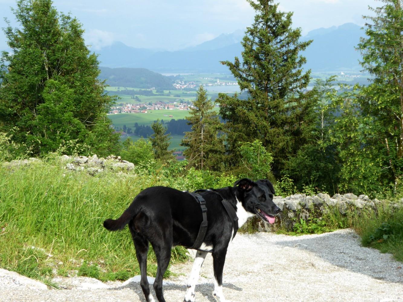 Burgruine Eisenberg - Abstieg mit Hund
