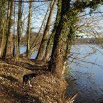 Silvester mit Hund in der seenreichen Uckermark