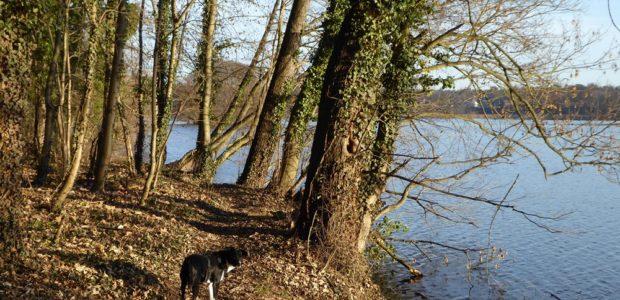 urlaub-mit-hund-uckermark-ausflug-seen-erfahrung