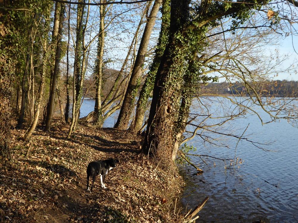 Templiner Stadtsee - Urlaub mit Hund in der Uckermark